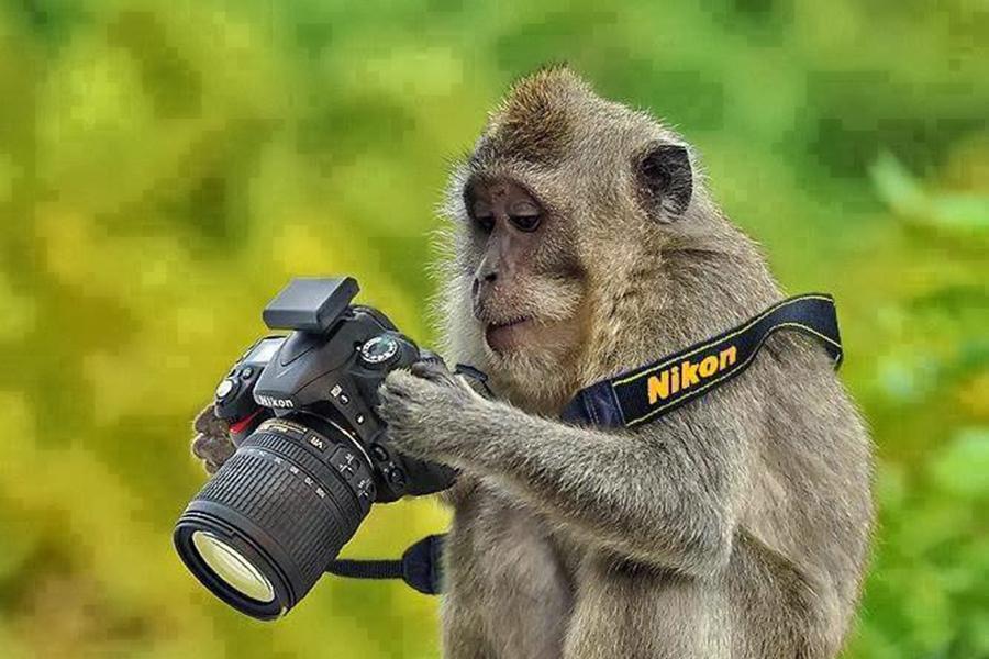 monkey monyet kamera nikon kera holding camera